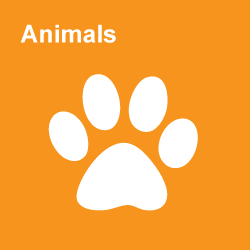 Animals Category